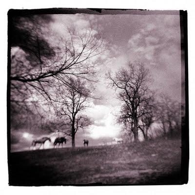 Distant Horses ©Ken Gibson