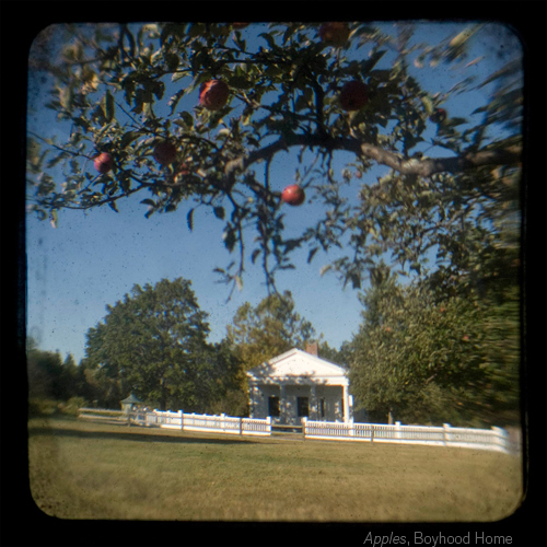 Apples, Boyhood Home ©Emma Powell
